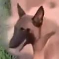 2匹のイヌが水路の隅を歩いていた。前の犬が止まる → 後ろの犬はこうした…