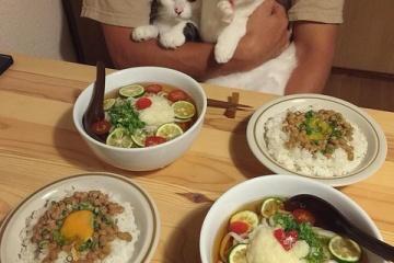 海外「日本食は猫まで魅了するのか!」ご飯を美味しそうに見つめる猫に骨抜きされる海外