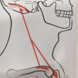 『胸鎖乳突筋と呼吸の関係』の画像