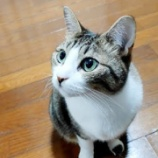 『猫のトイレの掃除が1分でおわる!【ねこトイレ】』の画像