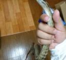 ワイ、蛇を食らう
