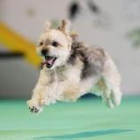 『【飛行犬撮影会】~予約状況のお知らせ~カレンダー撮影も好評受付中!』の画像