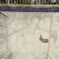 【もふもふ】 スケートパークに行ったら1羽のウサギがいた。斜面を登れず困っているようだ → 優しい男はこうします…