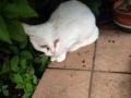 【画像】蓮舫さんのかわいい飼い猫wwwwwwwwww