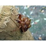 『(回答)蝉の穴』の画像