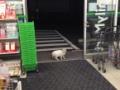 【画像】 ネコたちがコンビニでやりたい放題すぎる wwwwwwwwwwwwwwwwwwwwwww