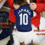 『ペットホテル 小型犬なら1泊2日で2520円!』の画像