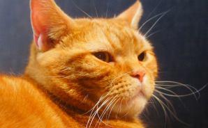 下半身が「どでーん!」とした猫