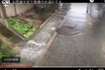 交野市、大雨警報と土砂災害警報が出て道路脇の側溝の水が溢れてる!〜京阪河内森駅近くの農道・住宅街のところ〜