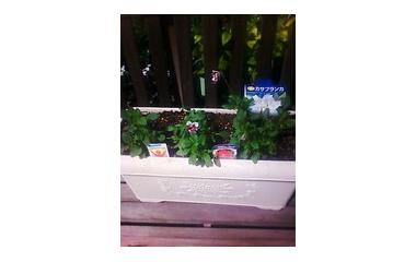 『球根植え時期最適期です。小戸店』の画像