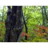 『ブナの木「豊国論」』の画像