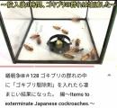 ブラックキャップをゴキブリの群れに入れてみた動画が話題に。死体が死体を呼ぶゴキブリドミノでワラタ