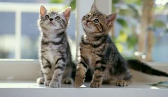【画像】猫が社会現象になるほど人々から愛される理由