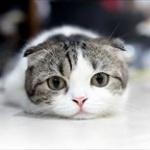 【画像】「かまってーかまってー」 宿題中の女の子と猫とのほほえましい攻防戦