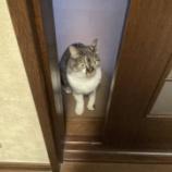 『今日、頑張れば、明日お休み!!!そして猫の日🐈』の画像