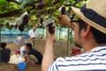 ぶどう狩りが始まるよ!7/15から神宮寺のぶどう畑のところ