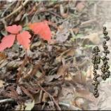 『ちっちゃな秋』の画像