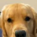 イヌを「笑顔」にするにはどうするの? → こうします…