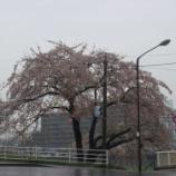 『わが家の桜08-15』の画像