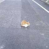 『猫様』の画像
