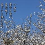 『晩秋の花』の画像