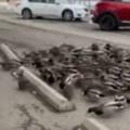 【ネコ?】 鳥たちが道端で餌をついばんでいた。いったい何が始まるんです? → こうなる…