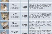 ネット投票でネコ市議6匹決定。1匹は急死で落選。こにゃん市長「一緒に頑張ろうニャー」…滋賀県湖南市(画像あり)