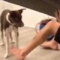 子イヌがソファの中から出てこられなくなった。底にいるぞ! 持ち上げて救出だ → 結果…