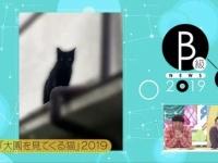 【乃木坂46】大園を見てくる猫wwwwwwwwww