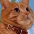 ネコ好きだったら行ってみたい! この巨大なモフモフたち → もしもアレが猫たちだったらこんな感じ…