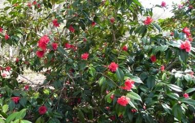 『広島県民の森 花 May 2 , 2014』の画像
