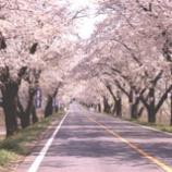 『石田ブログ『さくら満開?!』』の画像