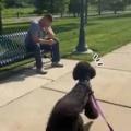 イヌに何も知らせずに散歩にやってきた。通りのベンチに男が座っている → それが10ヶ月ぶりに会う人間の友人だったこうなります…