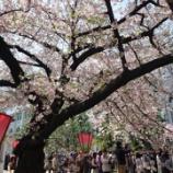 『造幣局桜の通り抜け2017 続き』の画像