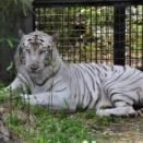 淫夢語録だけで動物園を楽しめる事が判明