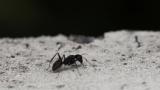 【虫注意】庭にいた虫の写真いろいろ撮ってみた(※画像あり)