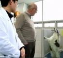 (∪^ω^)愛犬を喪った世界中の愛犬家がクローンを作るために韓国に殺到