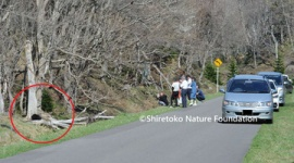 【北海道】「野生のヒグマはヌイグルミではありません」 インスタ蝿に注意喚起