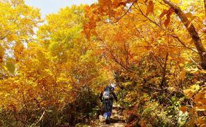 紅葉が素晴らしかった山を紹介