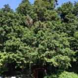 『地下の森』の画像