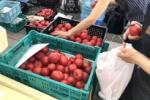 倉治のトマトめちゃ美味しい「アローズファーム」が収穫トマトの先行予約販売やってる!