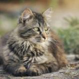 『猫の甲状腺機能亢進症』の画像