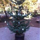 『戸田市後谷公園街かど広場のもみの木に願いを託してみませんか!』の画像