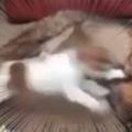 子イヌが犬の周りを走り回っていた。ちょっと静かにしなさい! → 日曜日のパパはこうします…