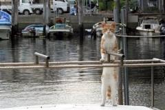 船橋港のネコの戦闘能力(画像あり)