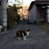 『桜と猫・・弘明寺』の画像