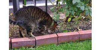 ウチの花壇に糞をしまくる裏の家の猫→その家に抗議に行くと「うちの子は外では排泄しません!」