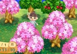 【ポケ森】キャンプ場に「桜」を咲かせる方法はコチラ!!!