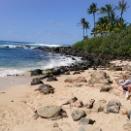ハワイ ハレイワで亀さんに会えました!(写真追加です)