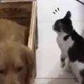 【ネコ】 子イヌたちと母犬が寝床で休んでいた。ちょうどいい場所見つけたにゃ♪ → 猫はこうなる…